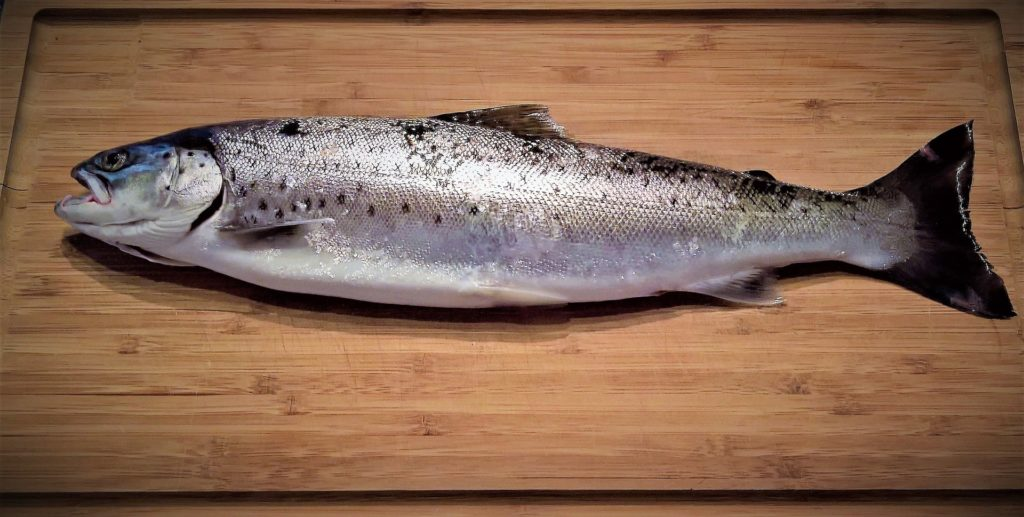 reino de dios anunciado por pescado